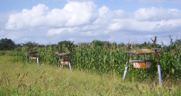 elephants-abeilles-clotures-de-miel