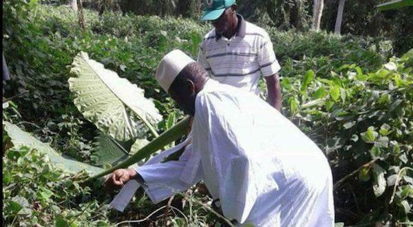 M.Jammeh en Guinée equatoriale