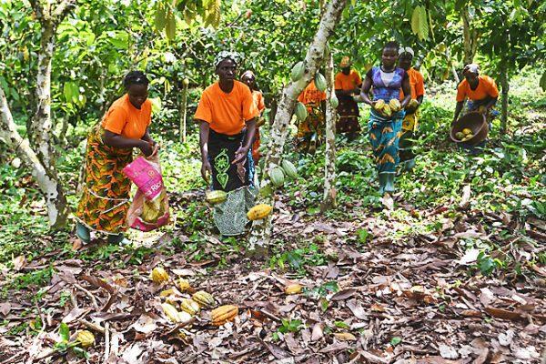 commerce équitable du Cacao en Côte d'Ivoire